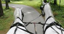 Center Parcs Excursions: Covered wagon ride at Center Parcs Bispinger Heide