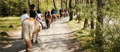 Px Pony Rides At Center Parcs Het Heijderbos Parkexplorercom